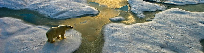 COP25 y COY15: Generaciones unidas por el medio ambiente