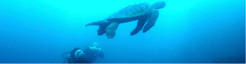 Biología marina, pasión y cuidado por los organismos del agua