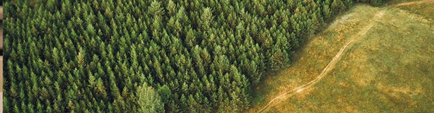 Conoce la carrera de Ingeniería Forestal